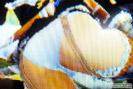 モンスターハンター4G エロ装備 画像 パンツ ドラゴンX キリン リベリオンZ 25
