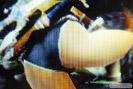 モンスターハンター4G エロ装備 画像 パンツ ドラゴンX キリン リベリオンZ 28