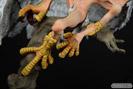 デビルマン シレーヌ-恍惚の妖鳥- オルカトイズ 画像 サンプル レビュー フィギュア 万野大輔 44