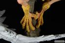 デビルマン シレーヌ-恍惚の妖鳥- オルカトイズ 画像 サンプル レビュー フィギュア 万野大輔 46